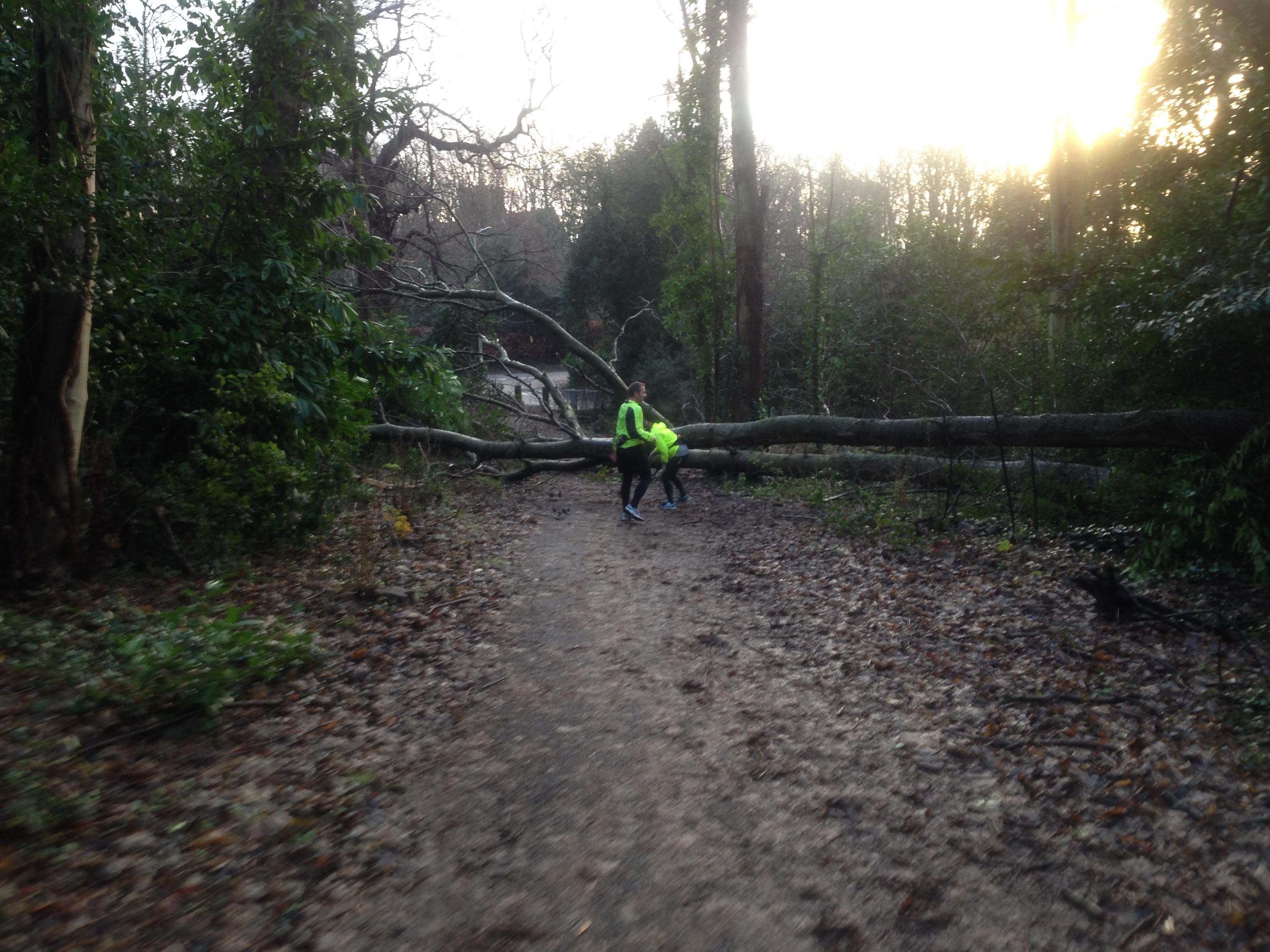 Teri, Justin and a fallen tree