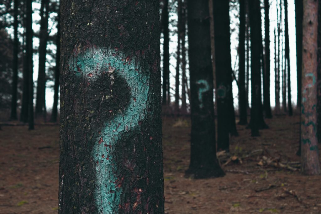 Question marks sprayed on trees