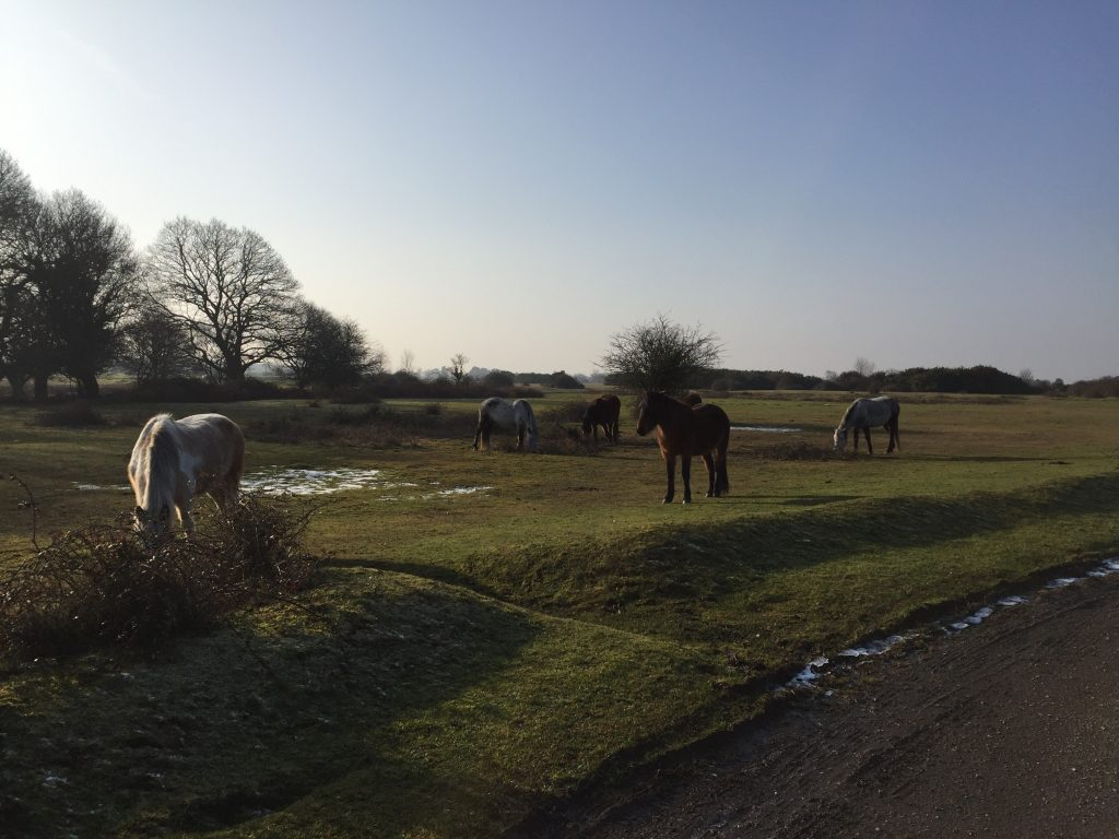 New Forest ponies by some frozen water