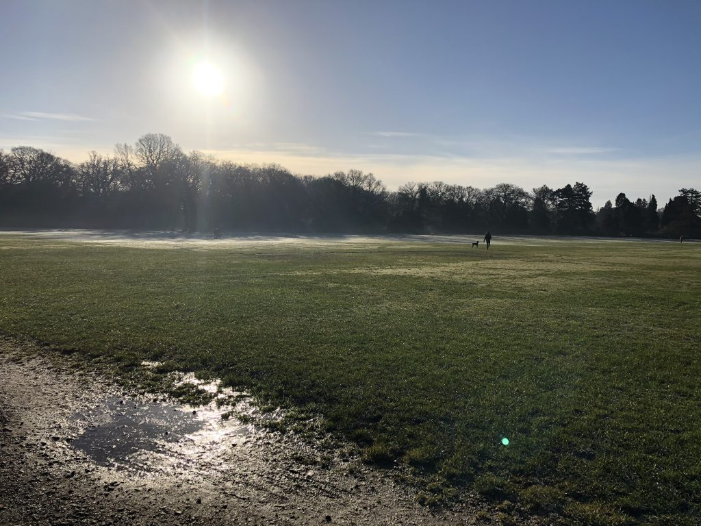 Image of sunshine on Southampton Common. The grass is frosty and an icy puddle can be seen.